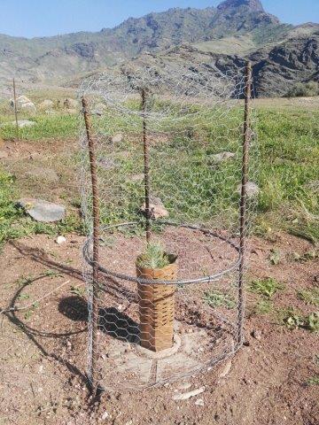 Se decidieron instalar vallas de acero para proteger los árboles y los Cocoons contra los muchos animales que habitan la zona.
