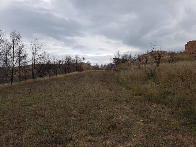 Se rehabilitará terrenos agrícolas y forestales privados, que se quemaron el junio pasado.