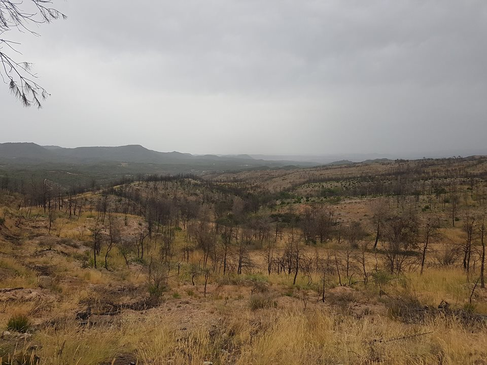 Thousands of trees (mainly pine species) burned during the land fires of last year. With the planting of broadleaf species, we intend to make the forest more resilient to forest fires.