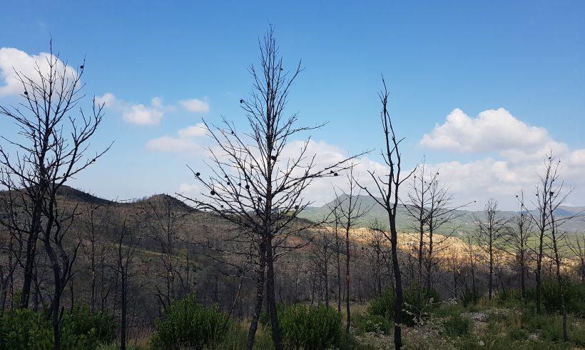 Cooperation with LIFE Montserrat in El Bruc, Catalonia