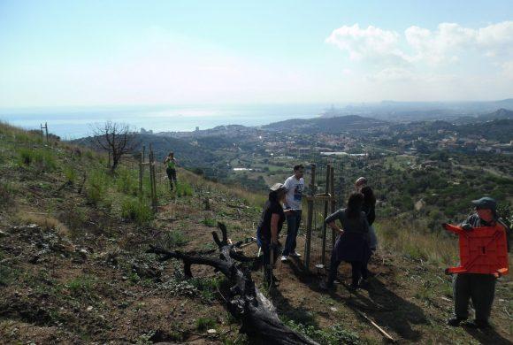 El monte cerca de la ciudad de Barcelona se quemó el junio pasado.