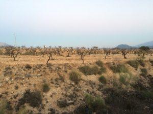 La zona es reconocida a nivel mundial por su producción de almendras ecológicas.