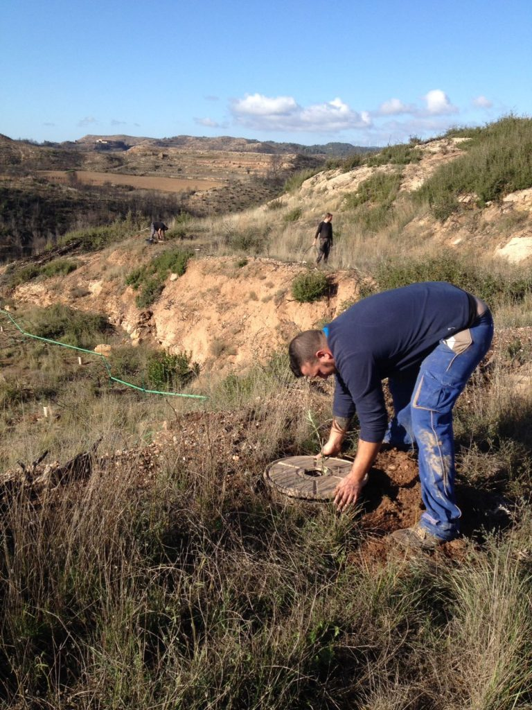 We planted Holm Oaks and Olives using the Cocoon, in order to rehabilitate the original terraces.