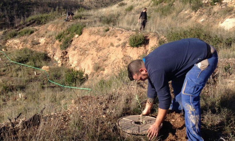Segunda plantación en El Bruc