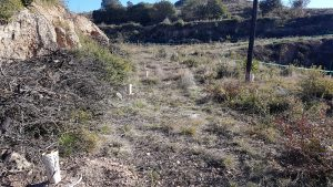 Several indegenous species, among them Holm Oak (Quercus ilex) and Olive (Olea europea), have been planted at the site in El Bruc.