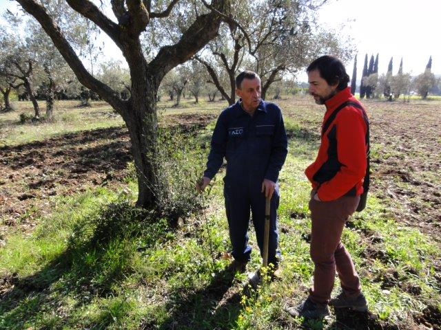 The farmers and councillor of El Bruc met in order to discuss the possibilities of vegetative reproduction of the Vera Olive.
