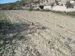 A pesar de las lluvias y tormentas de los últimos meses, la plantación se encuentra en buen estado.