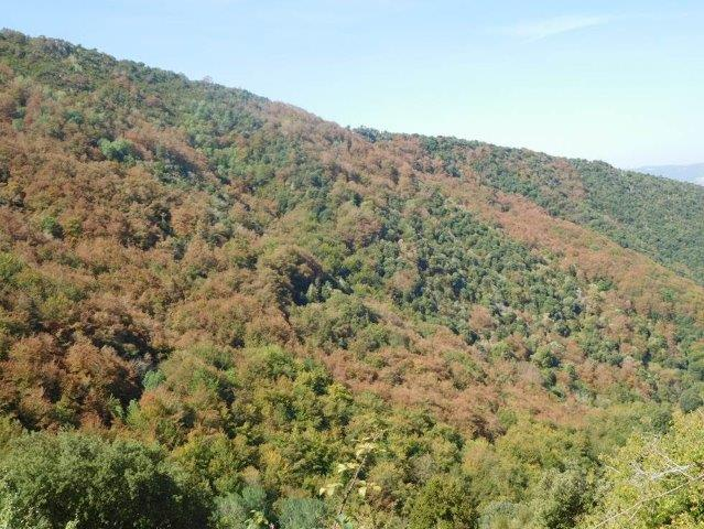 The Catalonian forests suffer from summer droughts