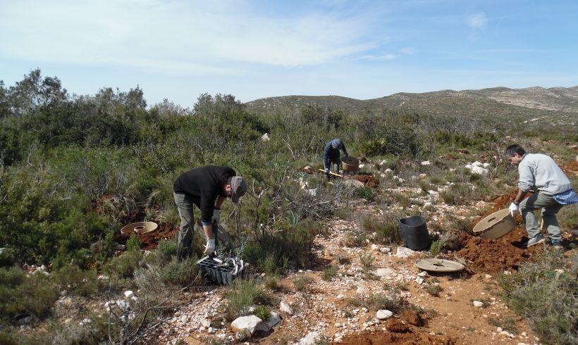 Se inicia la segunda plantación en Tous, Valencia
