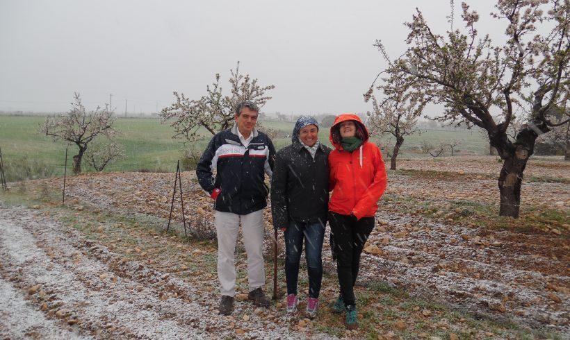 Inventory of cover crop possibilities in Chirivel, Almeria