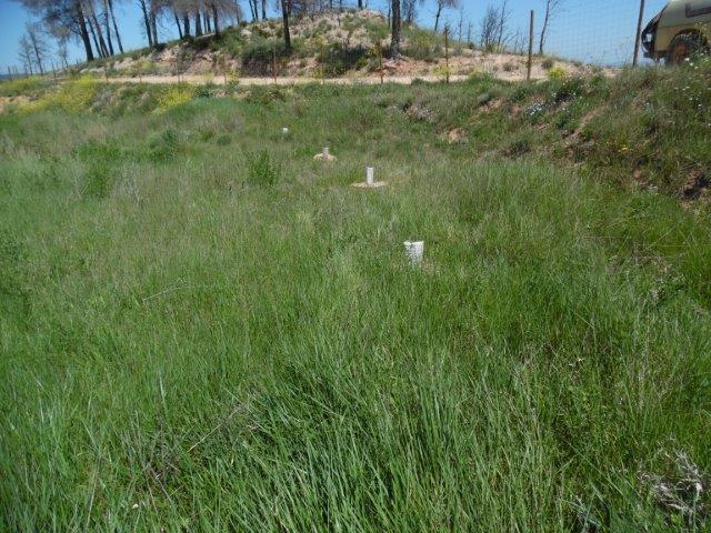 El suelo de las parcelas que plantamos el otoño pasado ya se está revegetando.