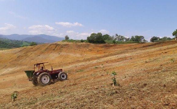 Siembre de cultivos de cobertura en Calabria