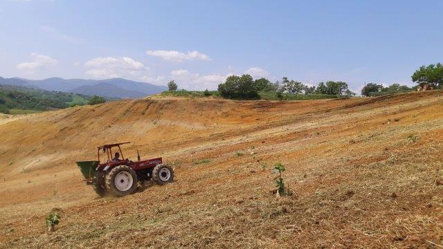 Cover crops sown in Calabria