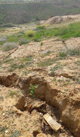 Visita al campo experimental en Calabria: erosión del suelo causada por el mal tiempo