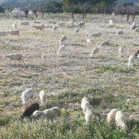 Evolución de las cubiertas verdes en Almería