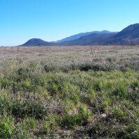 Programación de las tareas de replicación en Almería