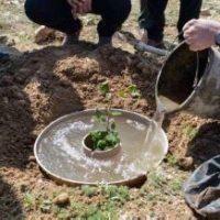 Un 'donut' de cartón: el invento para repoblar un gigantesco bosque de Palencia
