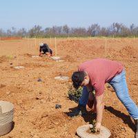 Replication activities in Italy – Apulia