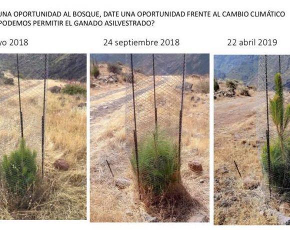 Celebrando el día de la tierra en Gran Canaria