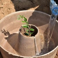 The cocoon, a tool designed to improve the efficiency of reforestation