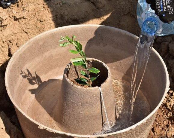 El cocoon, una herramienta pensada para mejorar la eficacia de las reforestaciones