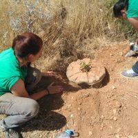 Gracias al Cocoon 15 árboles nuevos en Valdepeñas.