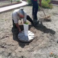 Palme nane piantate durante l'evento di apertura dell'Antica Trasversale Sicula
