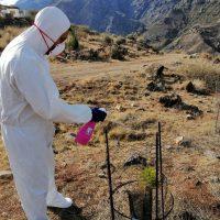 Técnicos del proyecto prueban producto repelente para evitar las cabras asilvestradas