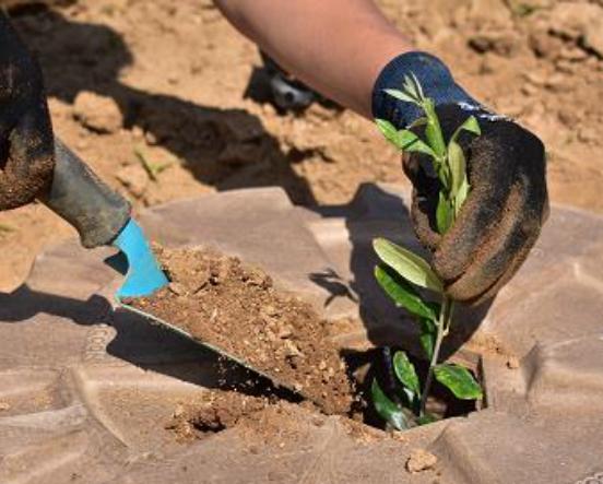 Evento proximo: El sistema Cocoon – aplicación en plantaciones agrícolas secas