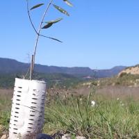 El Bruc Video – Descubre nuestro proyecto