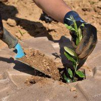 Seminario online sobre el Cocoon & The Green Link